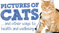 Pictures of cats... and other ways to health and wellbeing - conference presentations.